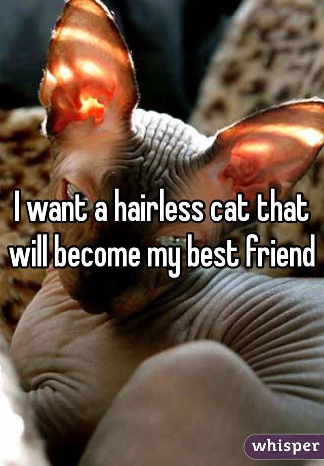 I want a hairless cat that will become my best friend