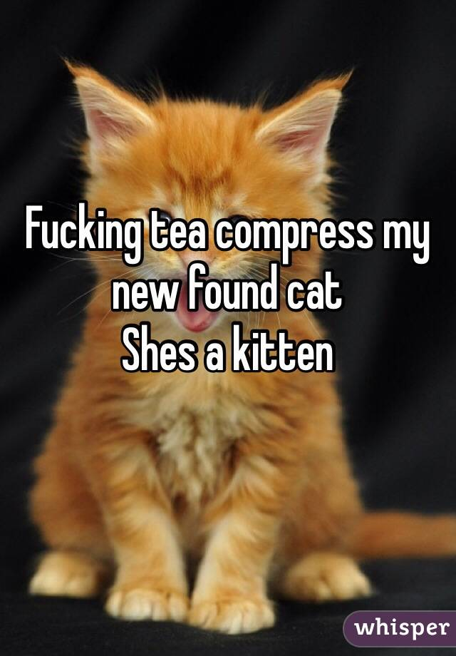 Fucking tea compress my new found cat Shes a kitten