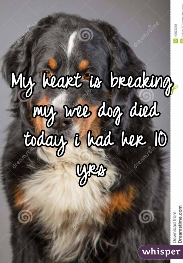 My heart is breaking my wee dog died today i had her 10 yrs