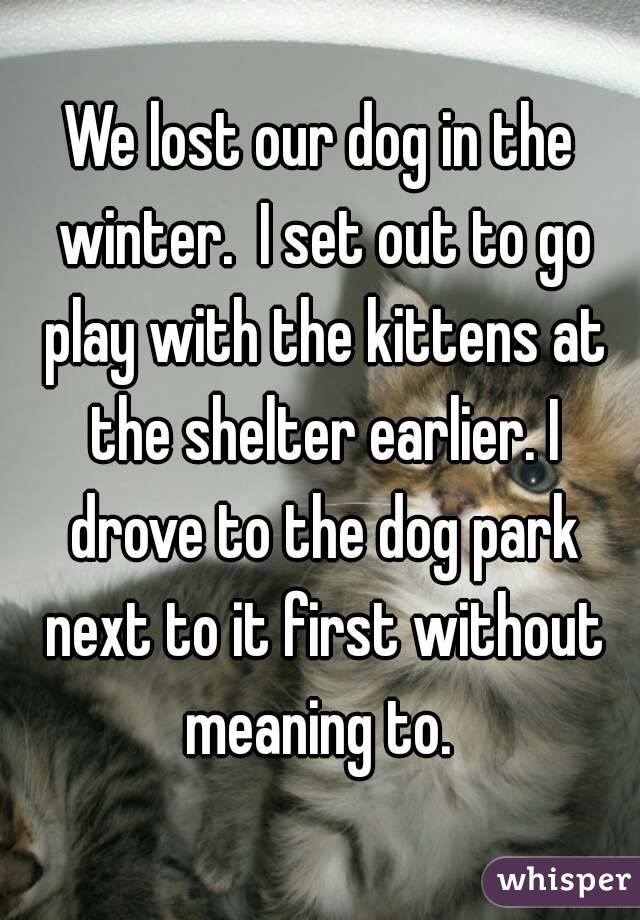 We lost our dog in the winter.  I set out to go play with the kittens at the shelter earlier. I drove to the dog park next to it first without meaning to.