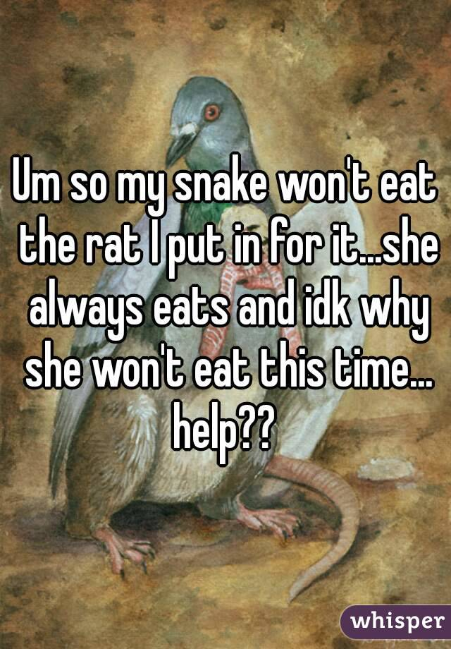 Um so my snake won't eat the rat I put in for it...she always eats and idk why she won't eat this time... help??