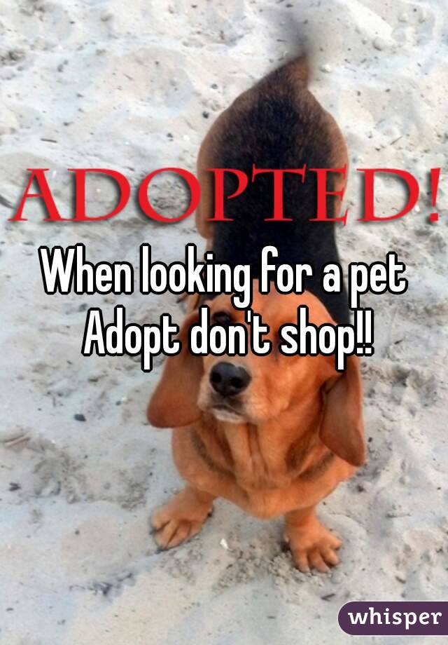 When looking for a pet Adopt don't shop!!