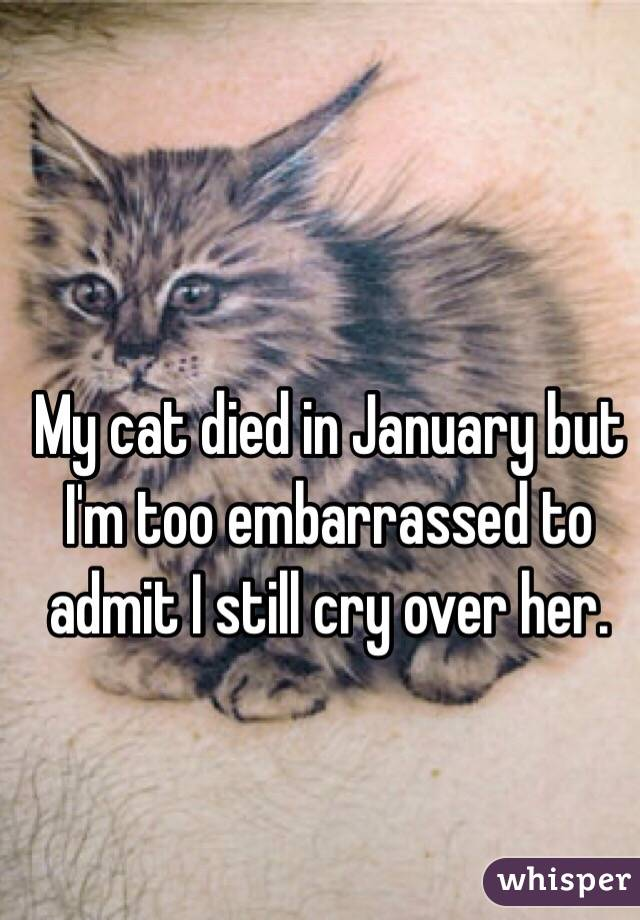 My cat died in January but I'm too embarrassed to admit I still cry over her.