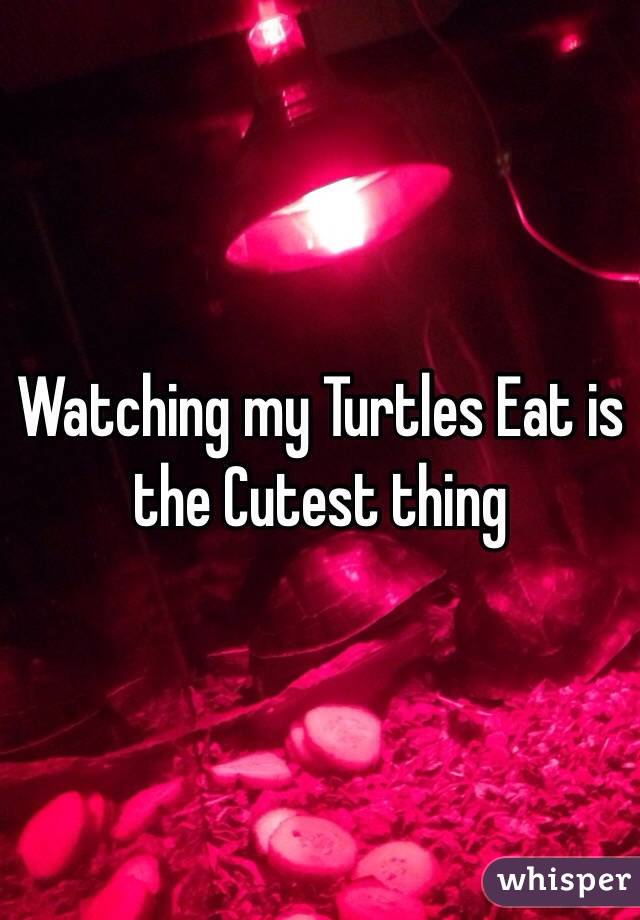 Watching my Turtles Eat is the Cutest thing