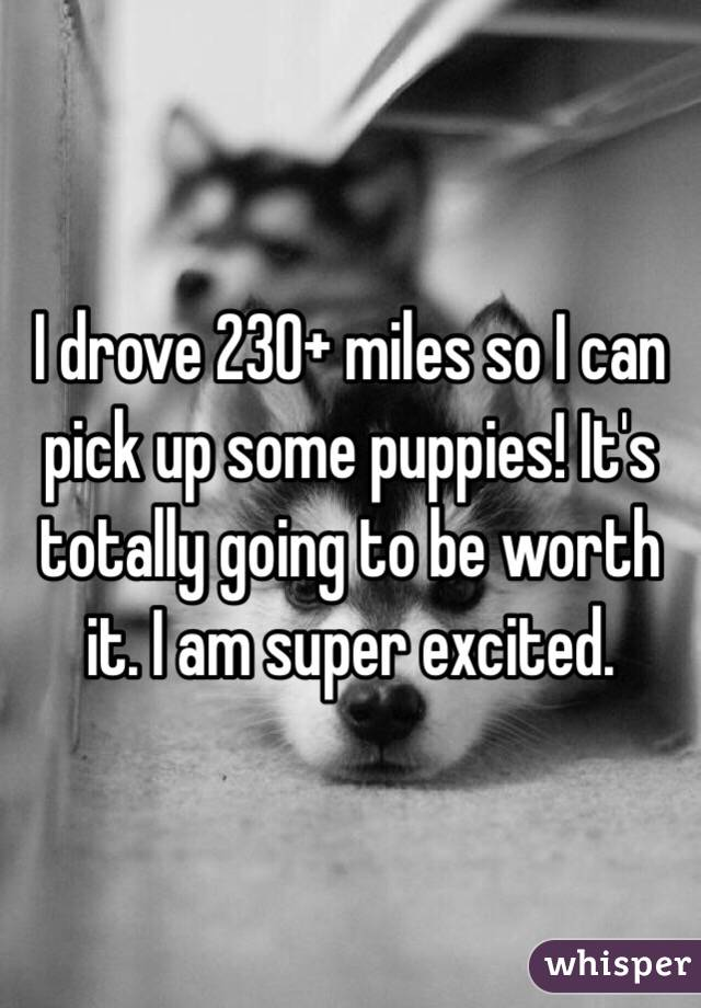 I drove 230+ miles so I can pick up some puppies! It's totally going to be worth it. I am super excited.