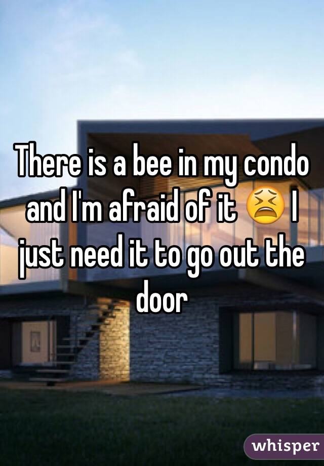 There is a bee in my condo and I'm afraid of it 😫 I just need it to go out the door