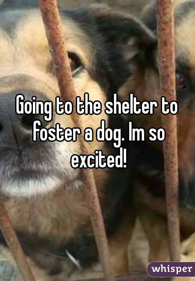 Going to the shelter to foster a dog. Im so excited!