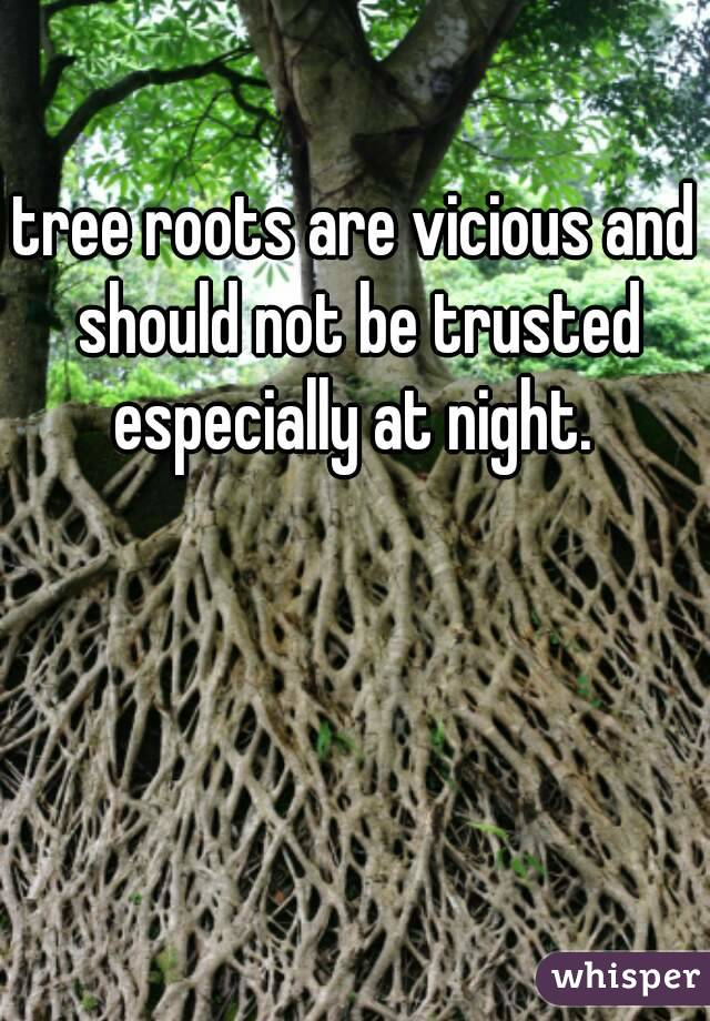 tree roots are vicious and should not be trusted especially at night.