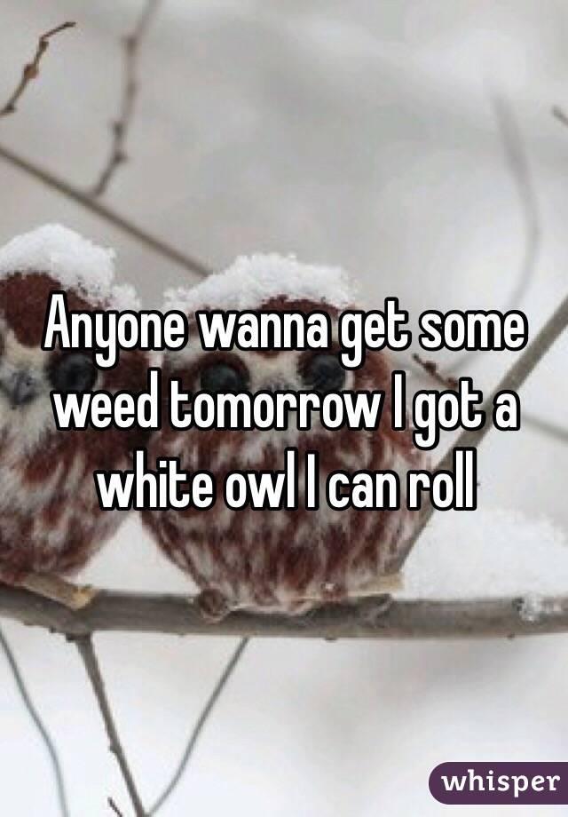 Anyone wanna get some weed tomorrow I got a white owl I can roll