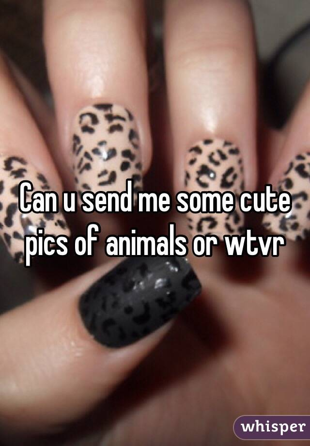 Can u send me some cute pics of animals or wtvr