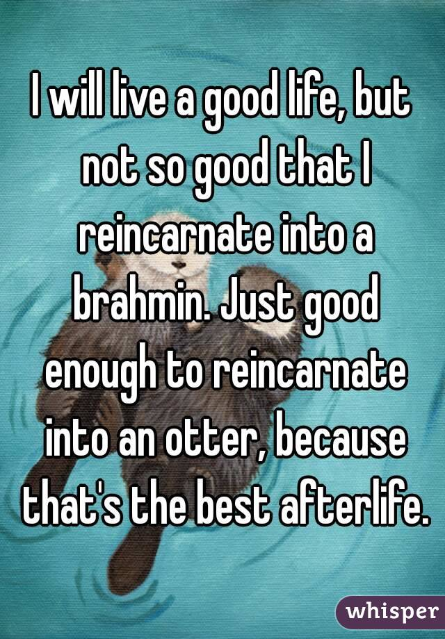 I will live a good life, but not so good that I reincarnate into a brahmin. Just good enough to reincarnate into an otter, because that's the best afterlife.