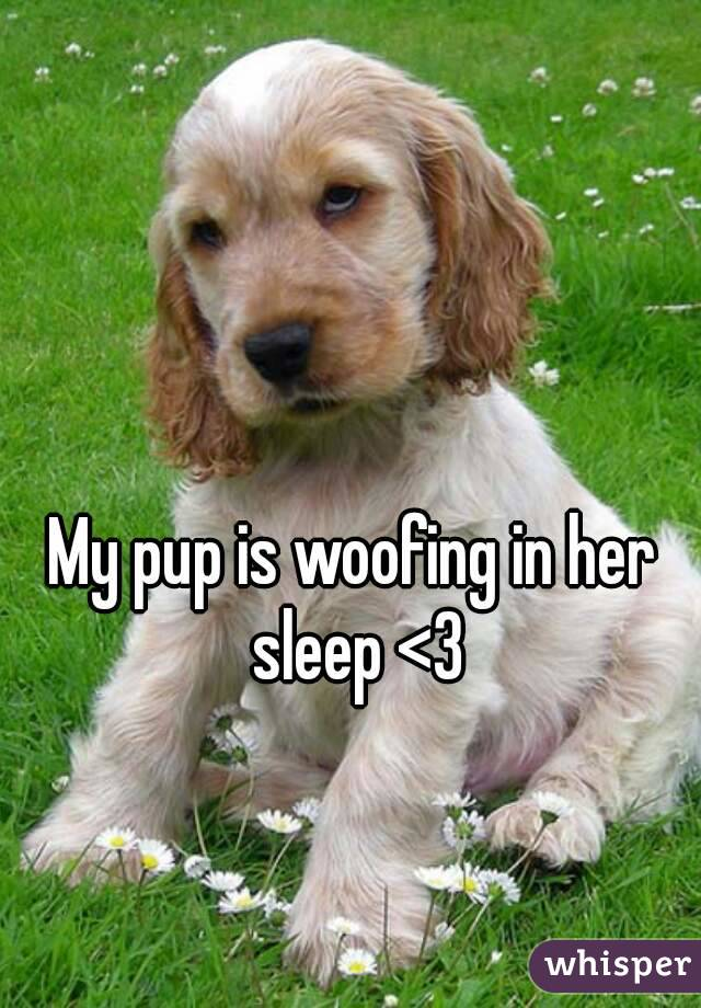 My pup is woofing in her sleep <3