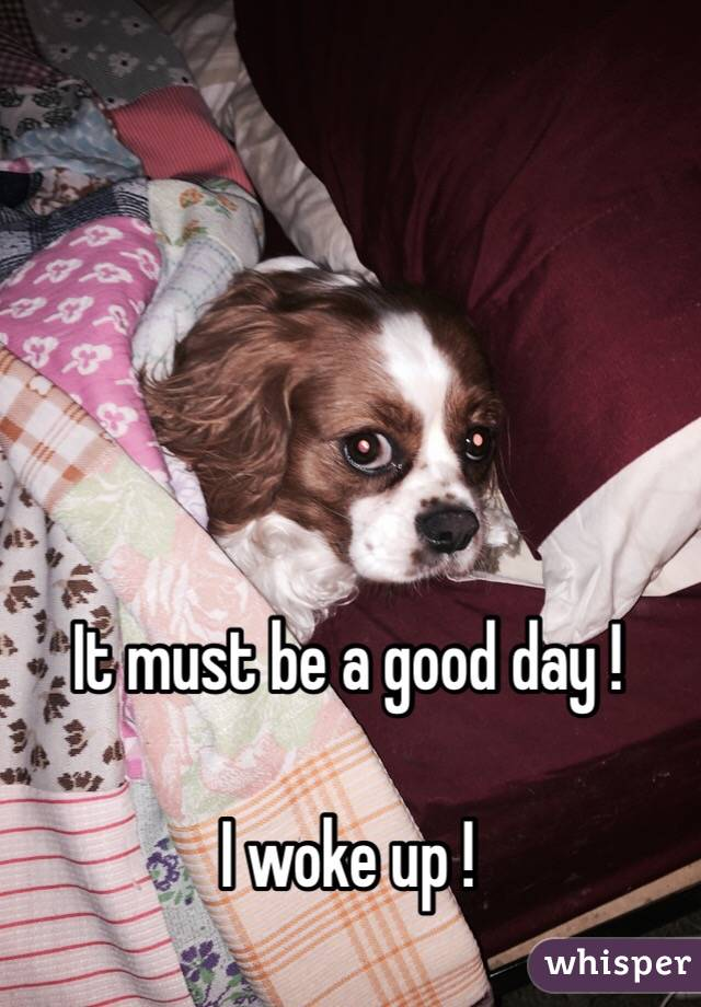 It must be a good day !  I woke up !