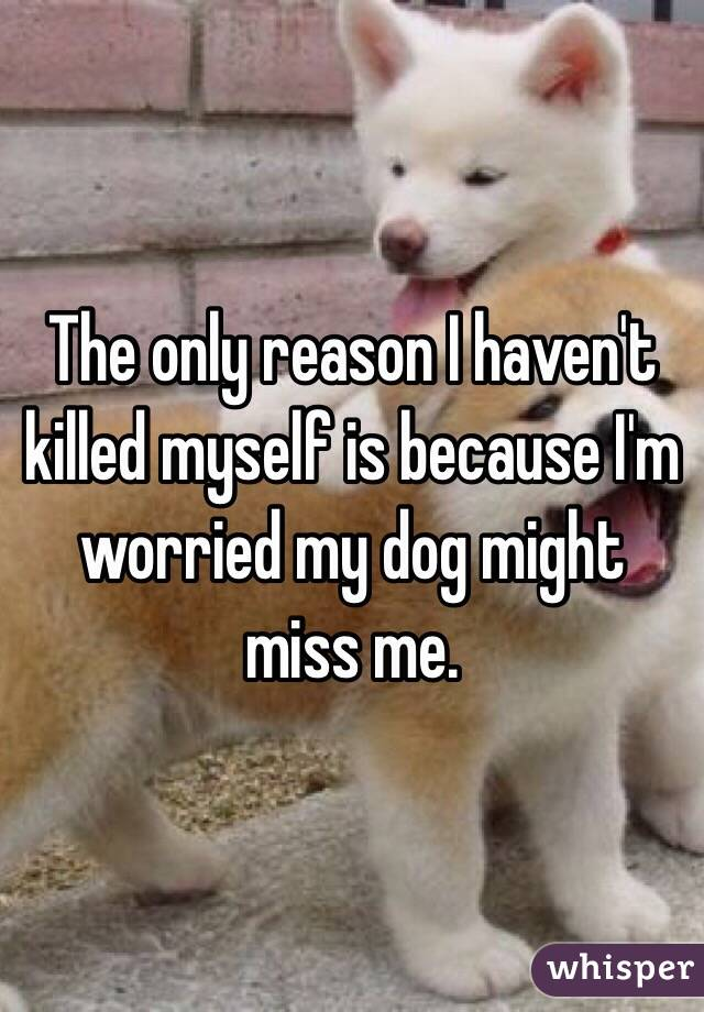 The only reason I haven't killed myself is because I'm worried my dog might miss me.