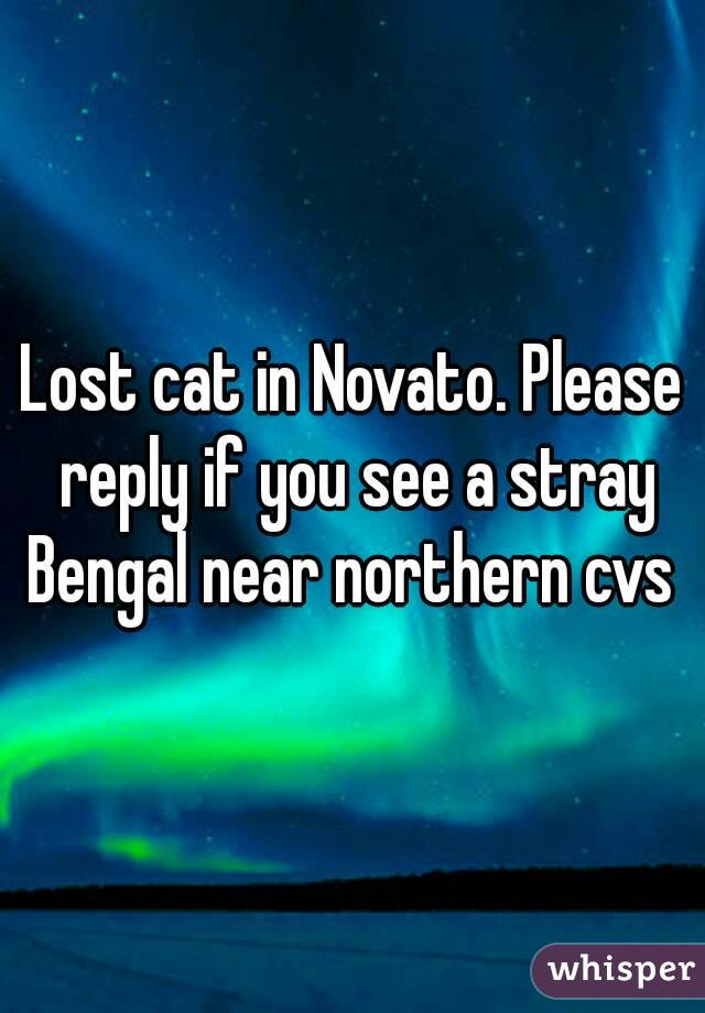Lost cat in Novato. Please reply if you see a stray Bengal near northern cvs