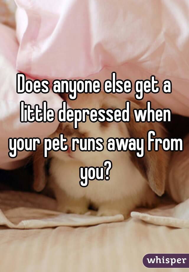 Does anyone else get a little depressed when your pet runs away from you?