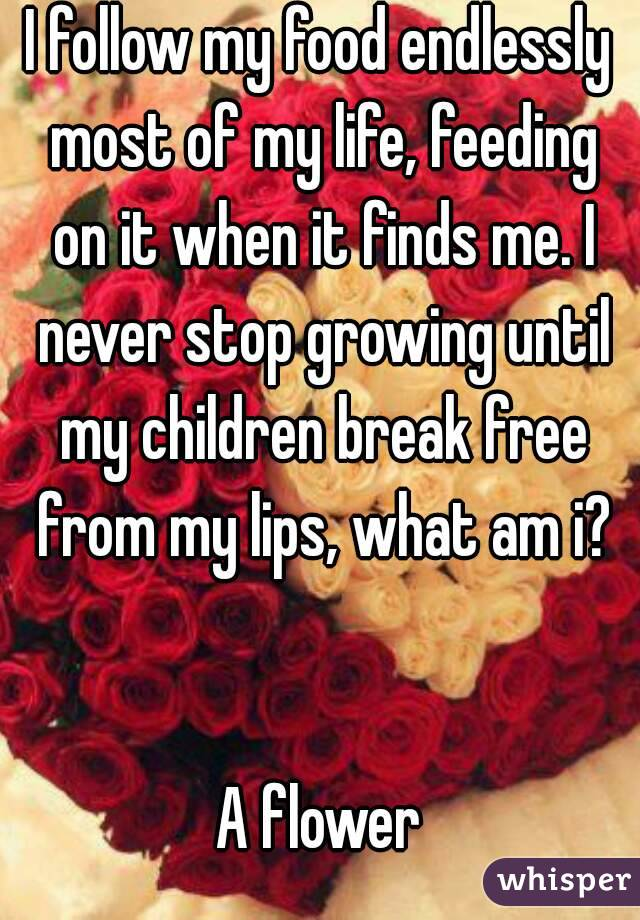 I follow my food endlessly most of my life, feeding on it when it finds me. I never stop growing until my children break free from my lips, what am i?   A flower