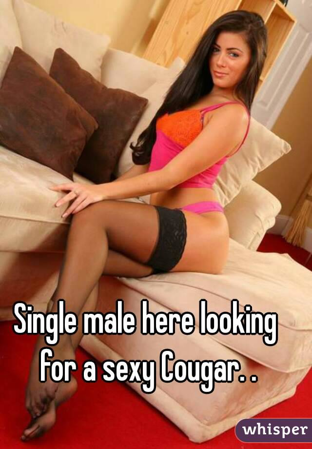 Single male here looking for a sexy Cougar. .