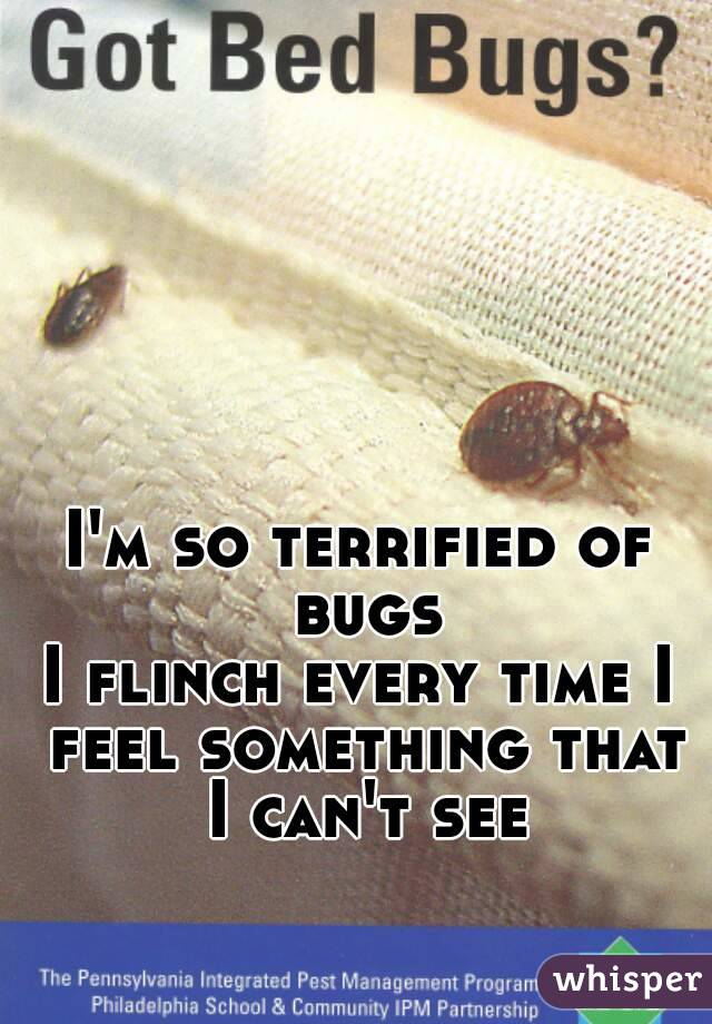 I'm so terrified of bugs I flinch every time I feel something that I can't see