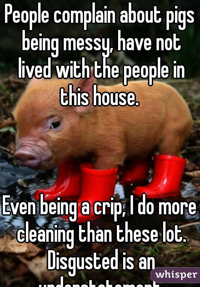 People complain about pigs being messy, have not lived with