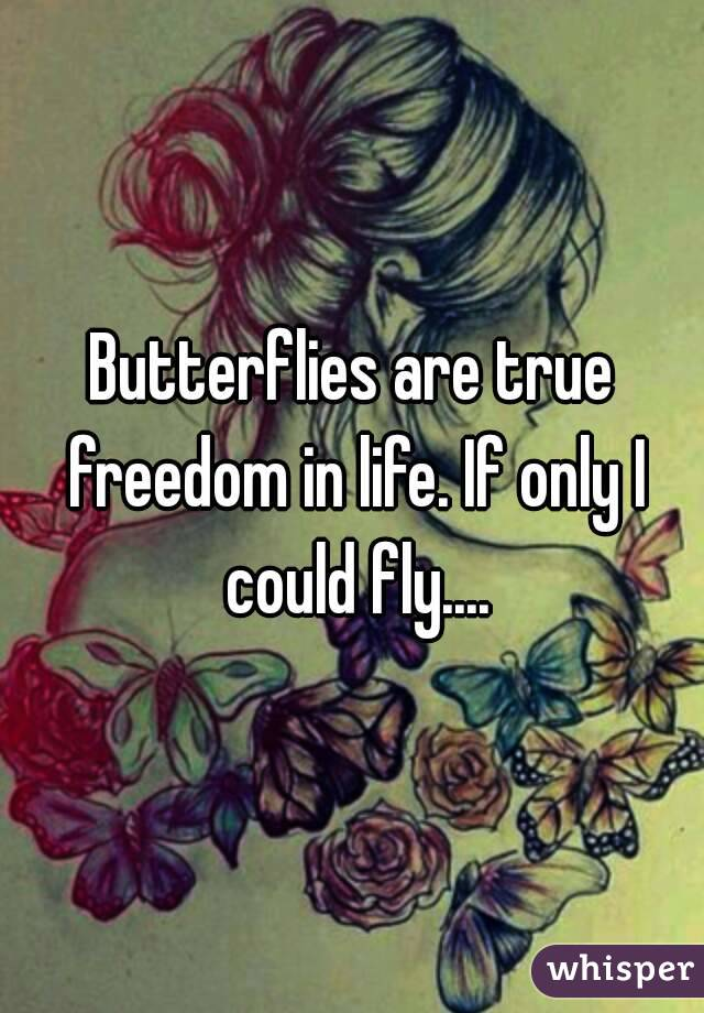 Butterflies are true freedom in life. If only I could fly....