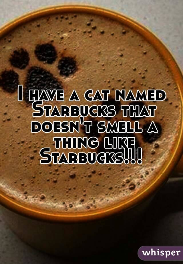I have a cat named Starbucks that doesn't smell a thing like Starbucks!!!