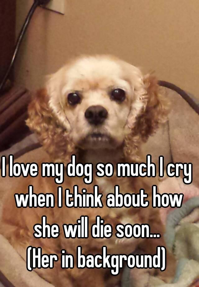 I Love My Dog So Much Cry When