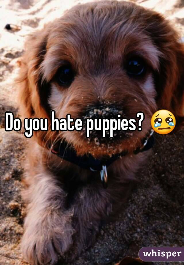 Image result for hate puppies