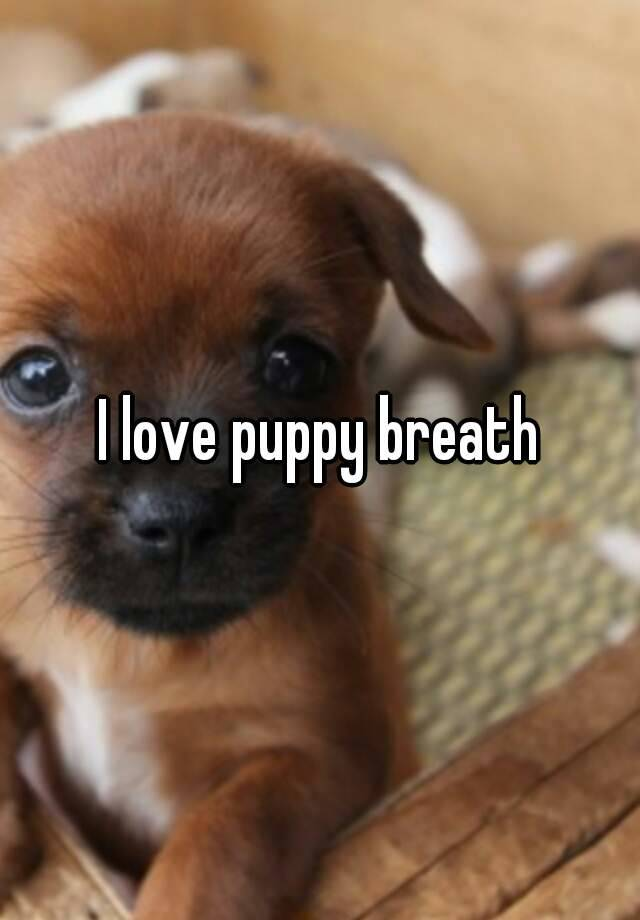 I Love Puppy Breath