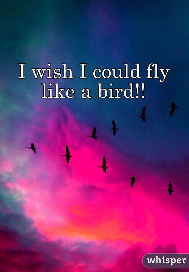 life like a bird