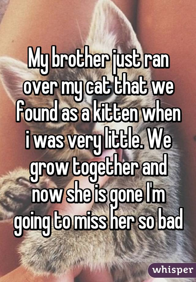 My brother just ran over my cat that we found as a kitten when i was very little. We grow together and now she is gone I'm going to miss her so bad
