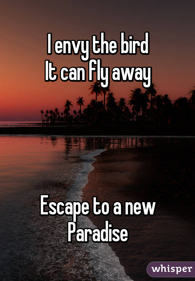 I envy the bird It can fly away     Escape to a new Paradise