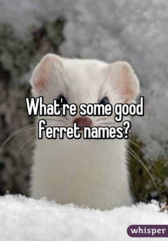 what re some good ferret names