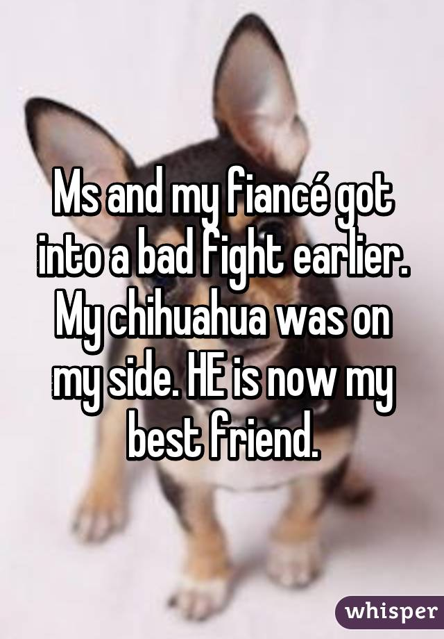 Ms and my fiancé got into a bad fight earlier. My chihuahua was on my side. HE is now my best friend.