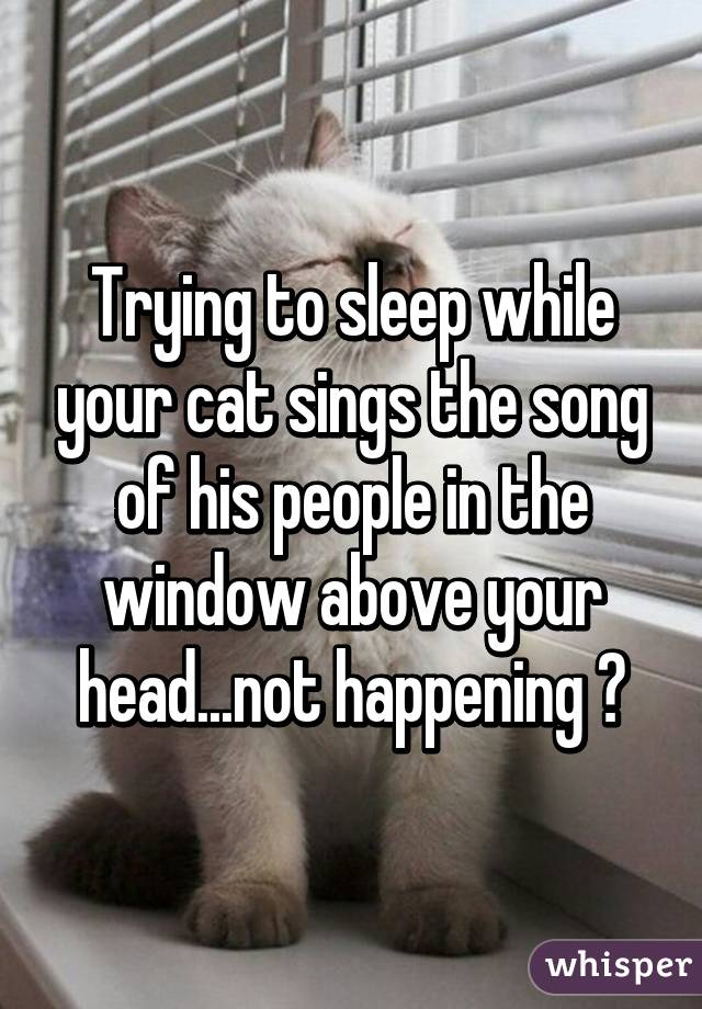Trying to sleep while your cat sings the song of his people in the window above your head...not happening 😑