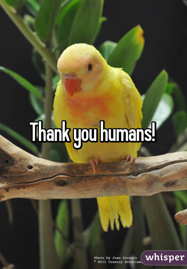 Thank you humans!