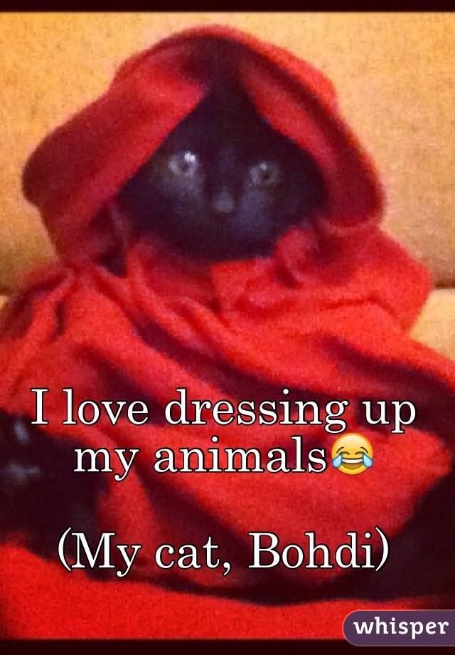 I love dressing up my animals😂  (My cat, Bohdi)