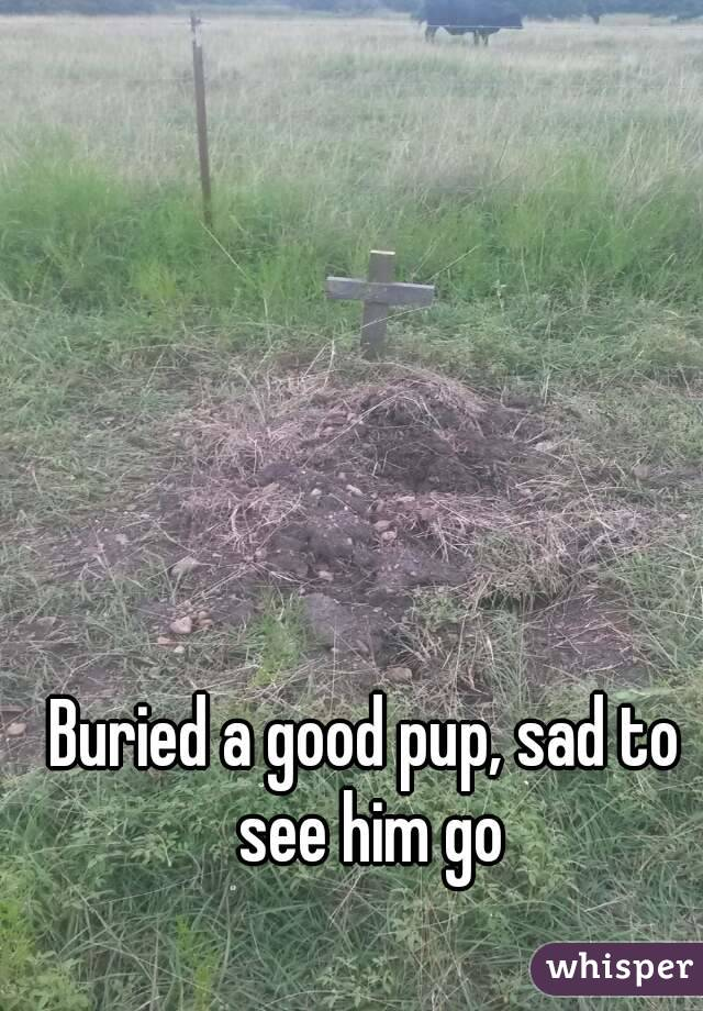 Buried a good pup, sad to see him go
