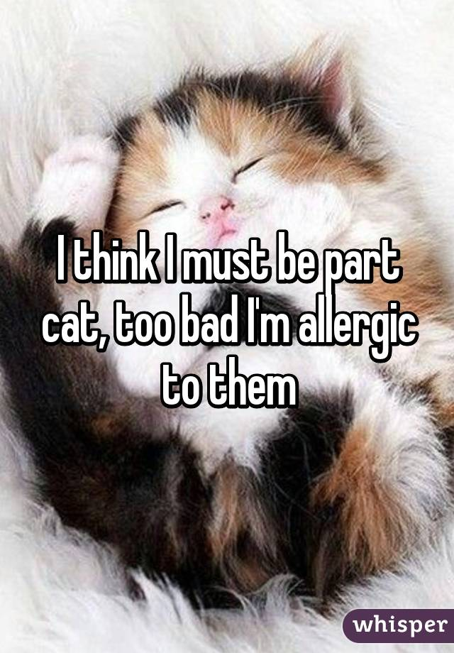 I think I must be part cat, too bad I'm allergic to them
