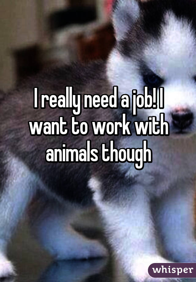 I really need a job! I want to work with animals though