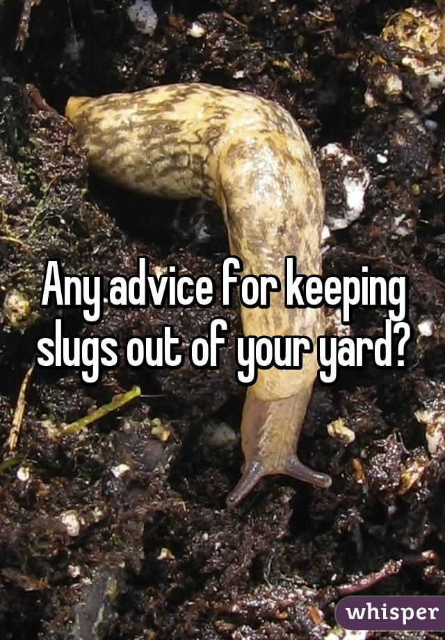 Any advice for keeping slugs out of your yard?