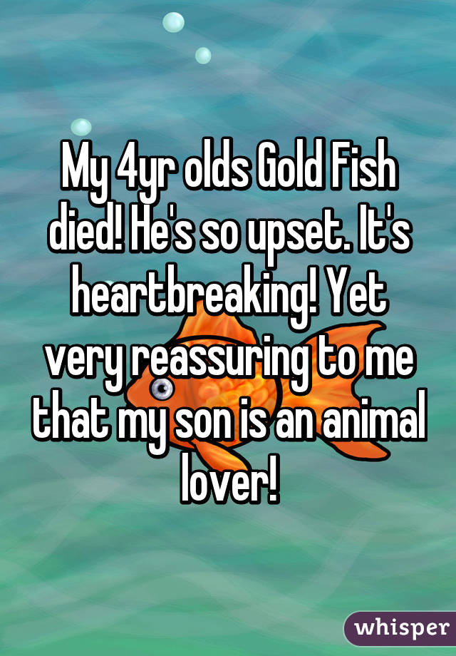 My 4yr olds Gold Fish died! He's so upset. It's heartbreaking! Yet very reassuring to me that my son is an animal lover!