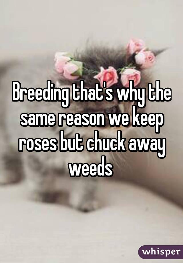 Breeding chuck