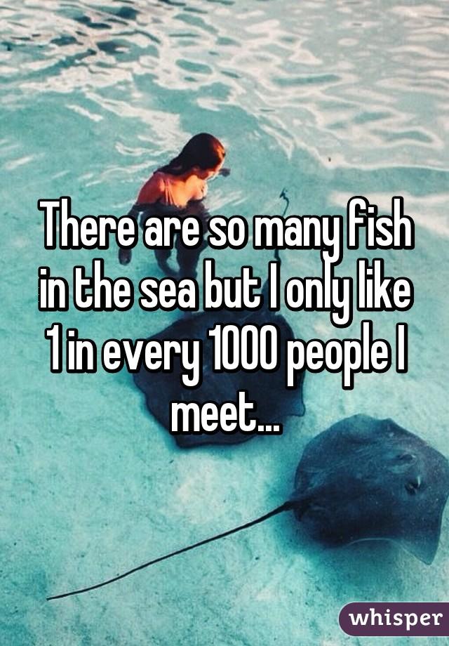 so many fish in the sea