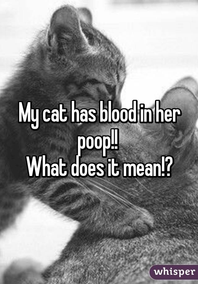 My Cat Has Blood In Her Poop What Does It Mean