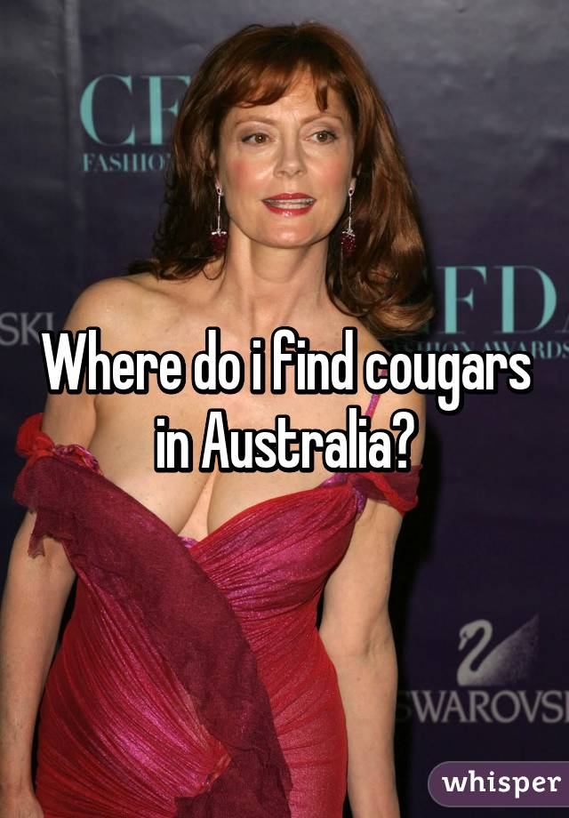 Cougars In Australia