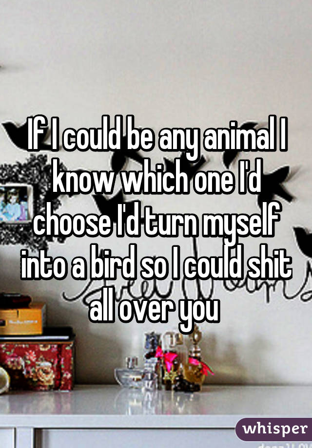 If I could be any animal I know which one I'd choose I'd turn myself into a bird so I could shit all over you