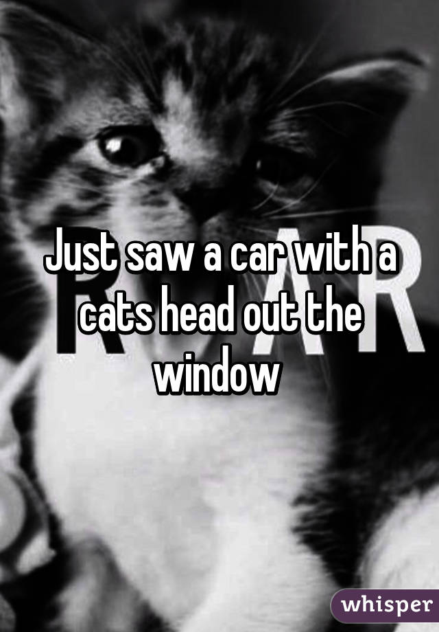 Just saw a car with a cats head out the window