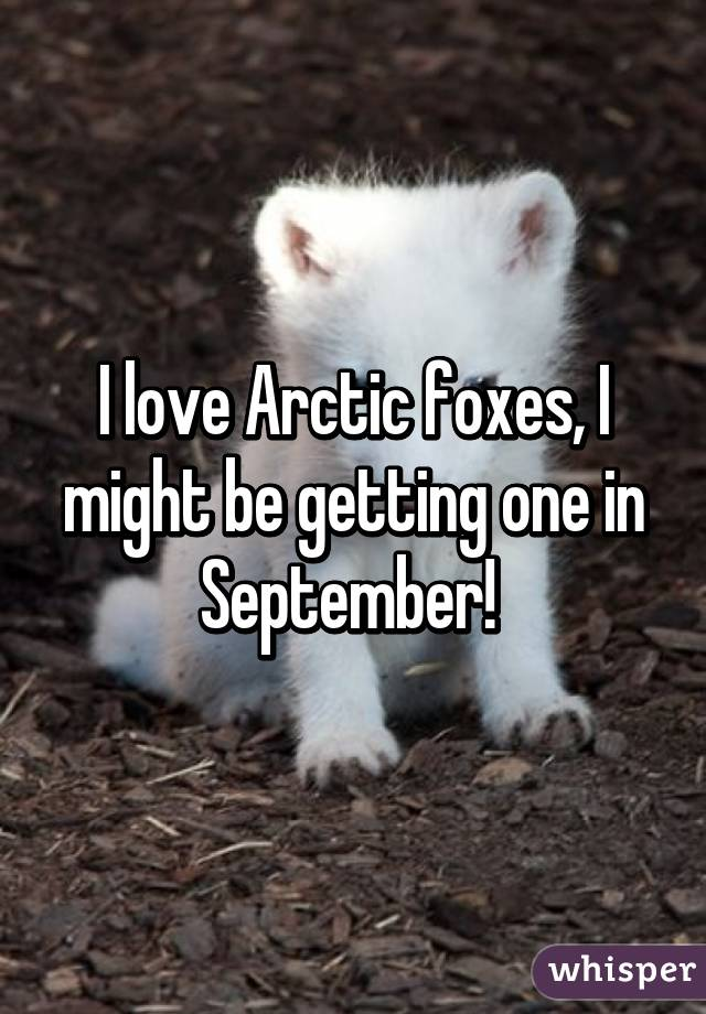 I love Arctic foxes, I might be getting one in September!
