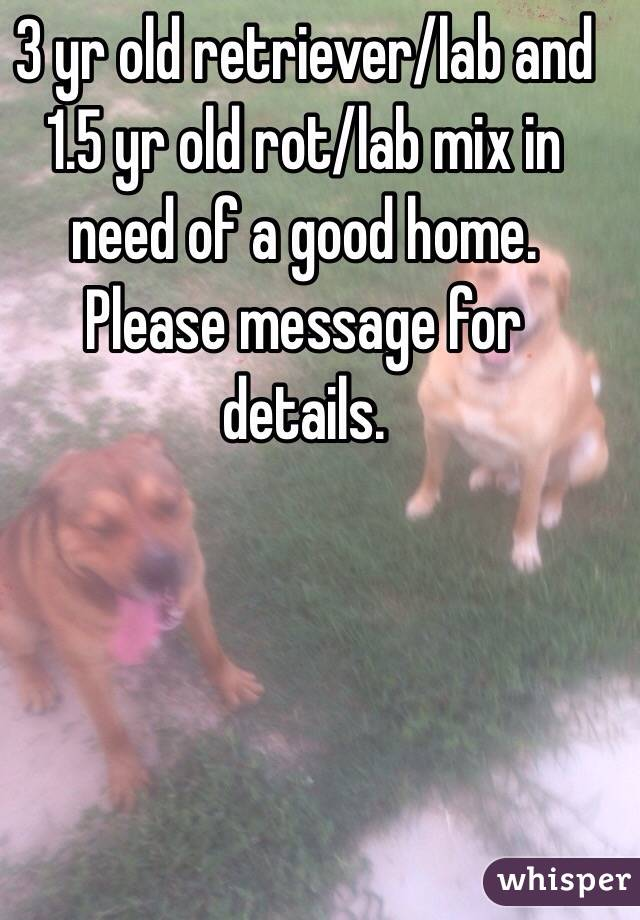 3 yr old retriever/lab and 1.5 yr old rot/lab mix in need of a good home. Please message for details.
